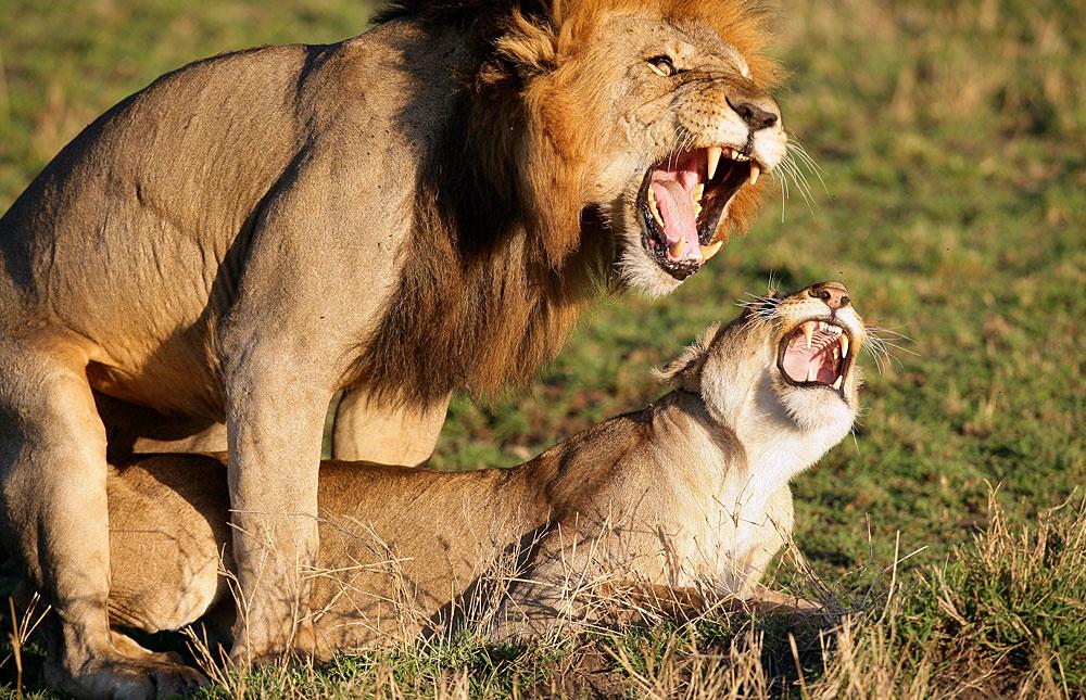 Секс Рака и Льва